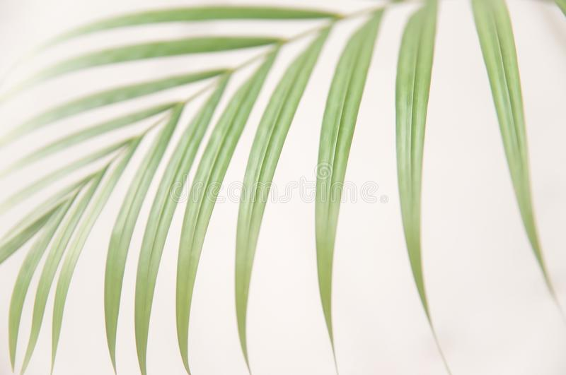 Palm leaves on white wall stock images