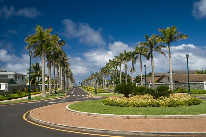 Download Palm-lined street stock image. Image of community, district - 2738961