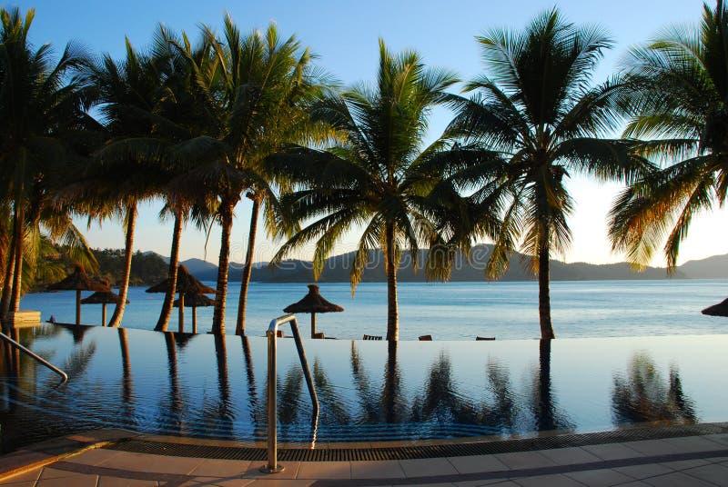 Palm met bezinning over zwembad stock fotografie