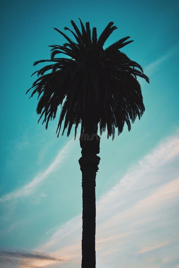Palm met een blauwe bewolkte hemel stock foto