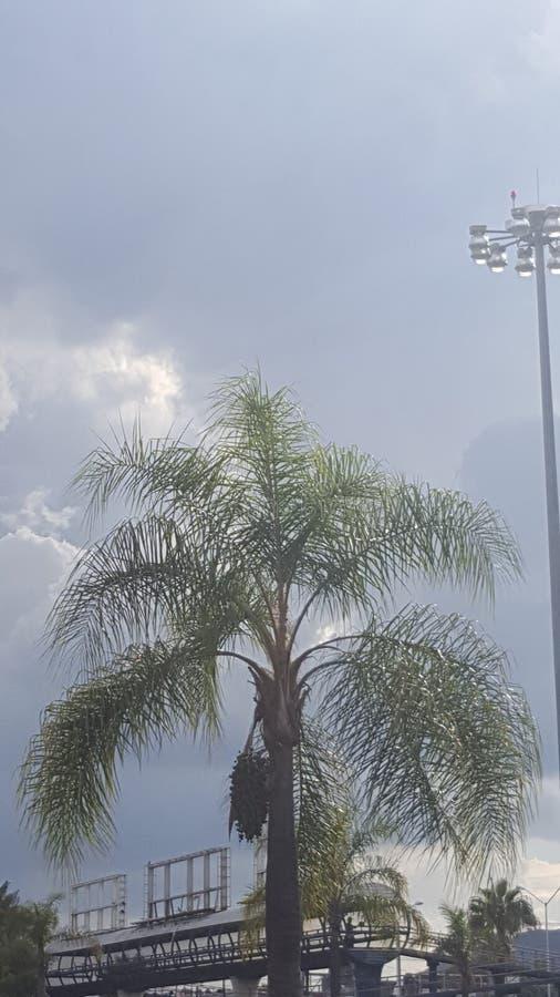 palm met grijze rug royalty-vrije stock fotografie