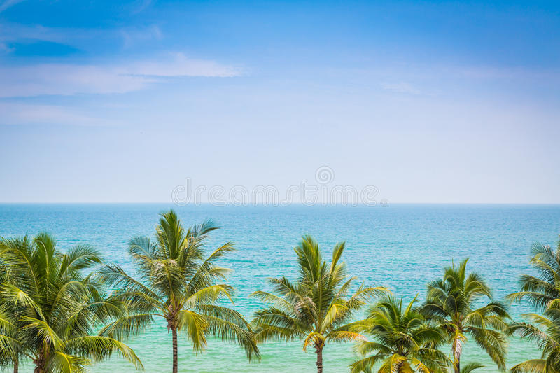 Palm met mooie zeegezichtachtergrond royalty-vrije stock foto's