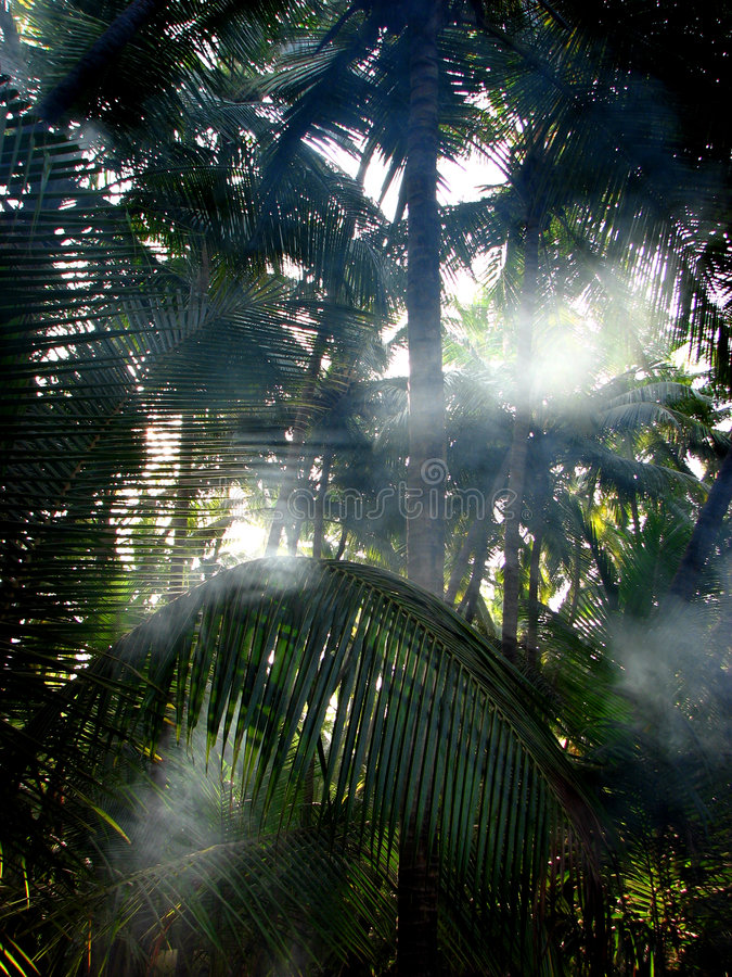 Download Palm Mist Royalty Free Stock Photos - Image: 2150598