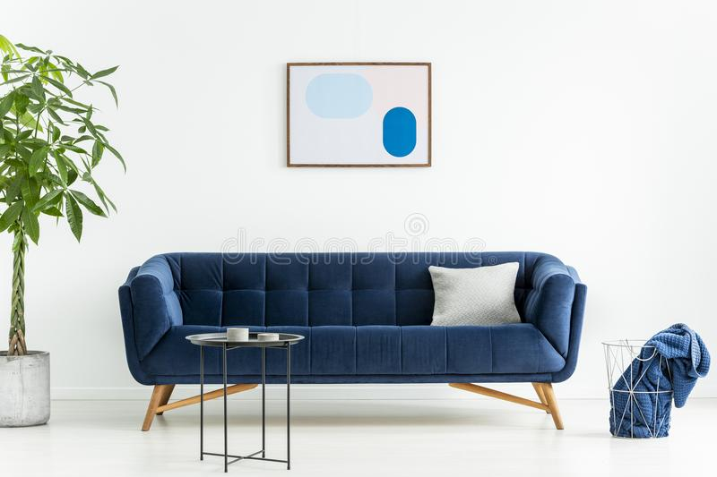 Palm next to blue sofa with pillow in white living room interior with poster and black table. Real photo. Concept stock photo