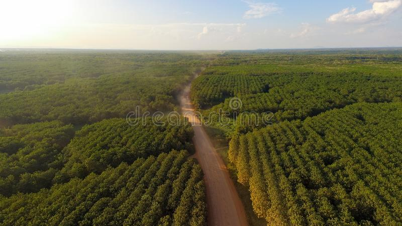 Palm Oil Plantation Road - Aerial View stock image
