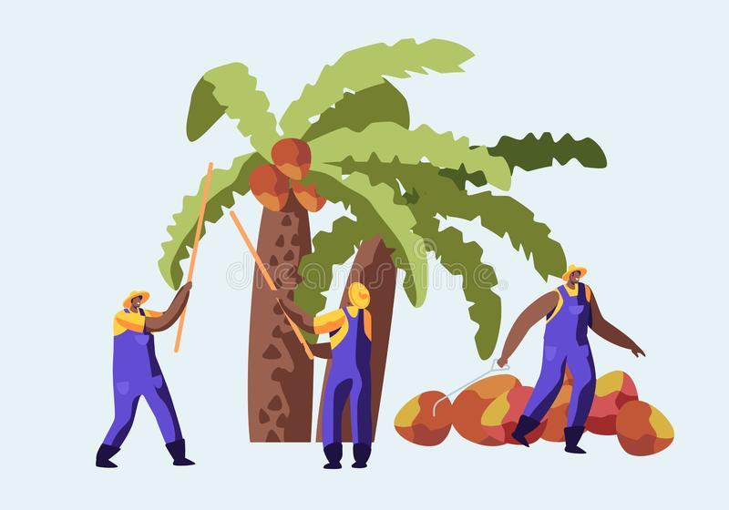 Palm Oil Producing Industry Concept with Workers Collecting Fruits or Coconuts from Palm Tree, Seasonal Work, Laborers Taking Crop. On African or Asian stock illustration
