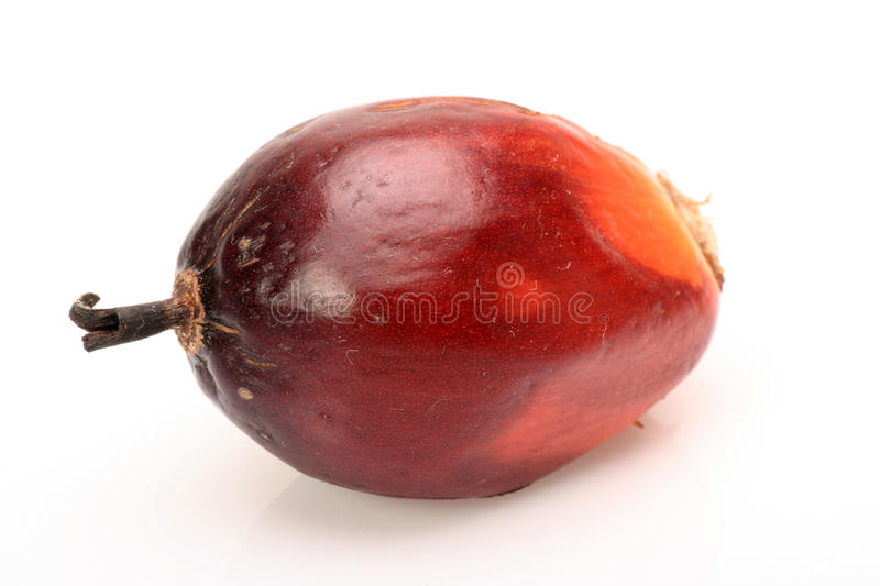 Palm oil seed isolated. This is the seeds of palm oil fruit which are use to make cooking oil, vegetable fats etc royalty free stock photography