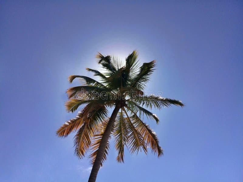 Palm op blauwe hemel met de erachter zon stock fotografie
