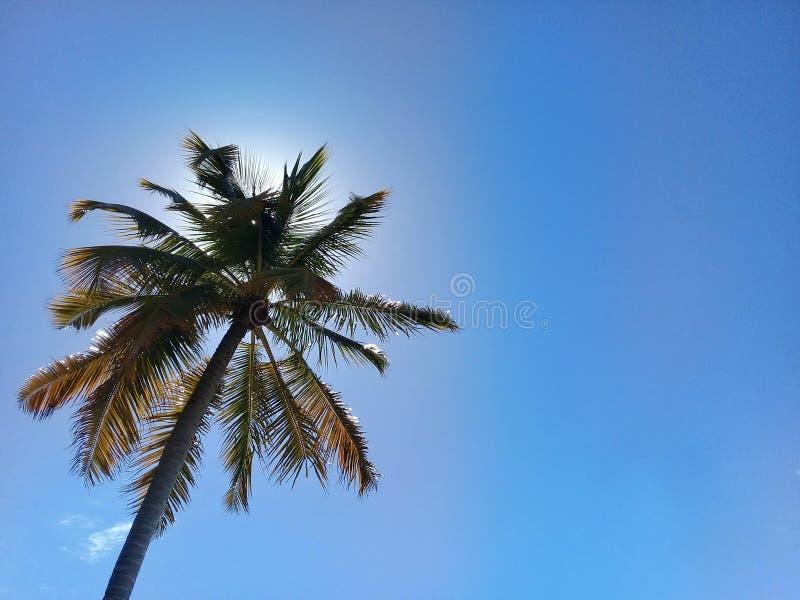 Palm op blauwe hemel met de erachter zon royalty-vrije stock afbeelding