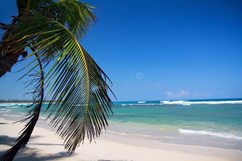 Palm op Caraïbisch strand stock afbeelding