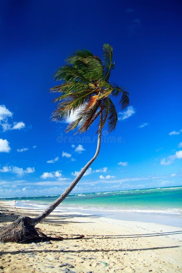 Palm op Caraïbisch strand royalty-vrije stock fotografie
