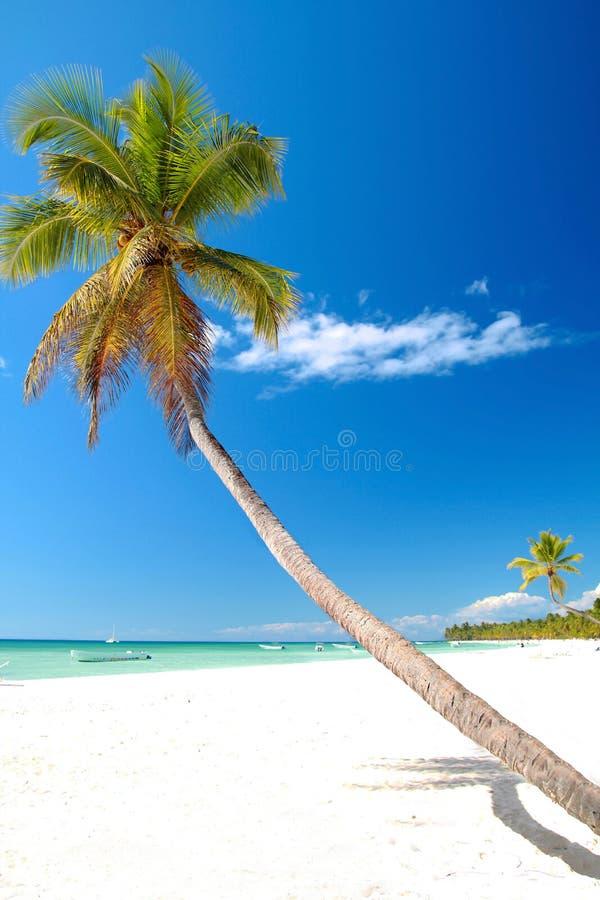 Palm op Caraïbisch strand met wit zand stock afbeelding