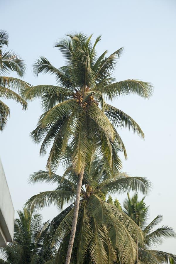Palm op de blauwe hemel royalty-vrije stock foto