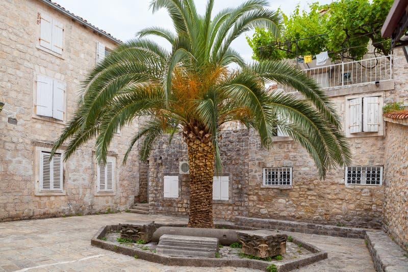 Palm op de comfortabele straat van oude stad, Monenegro stock foto's