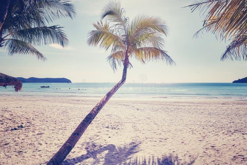 Palm op een mooi tropisch strand, kleur toegepast stemmen stock foto