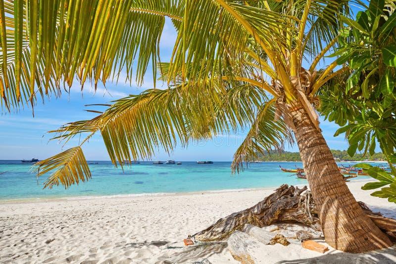 Palm op een mooi tropisch strand, Thailand royalty-vrije stock foto