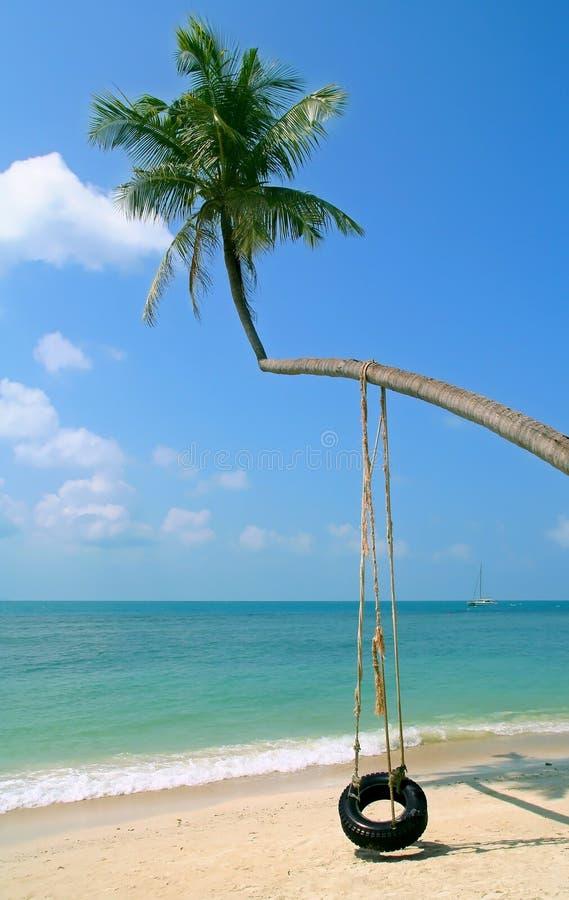 Palm op een strand royalty-vrije stock foto's