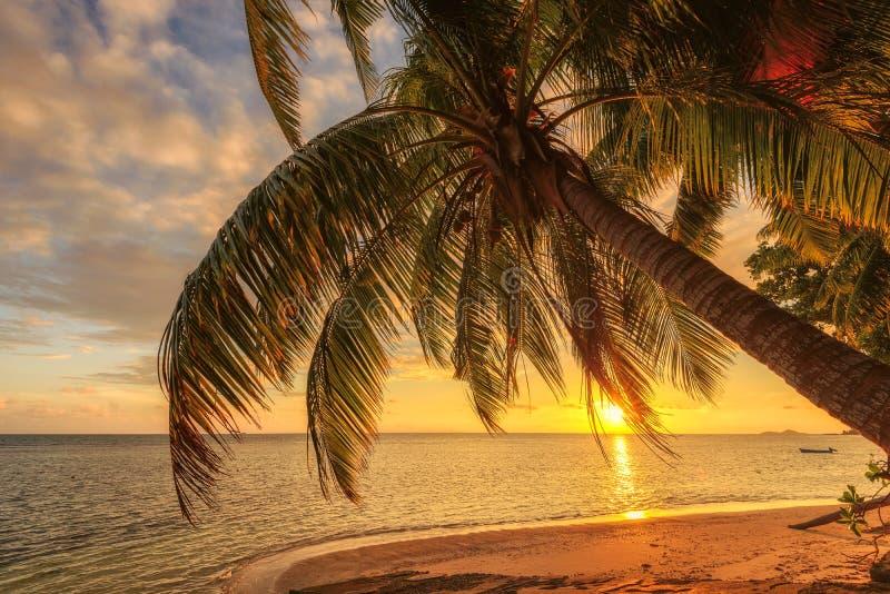 Palm op een strand bij zonsondergang op Seychellen stock afbeelding