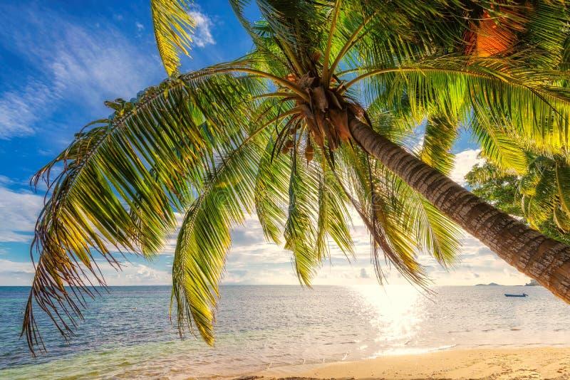 Palm op een strand in zonsondergangtijd op Seychellen royalty-vrije stock afbeelding