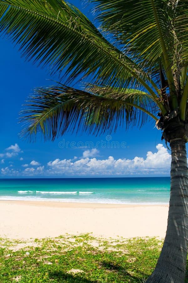 Palm op een tropisch strand stock afbeelding