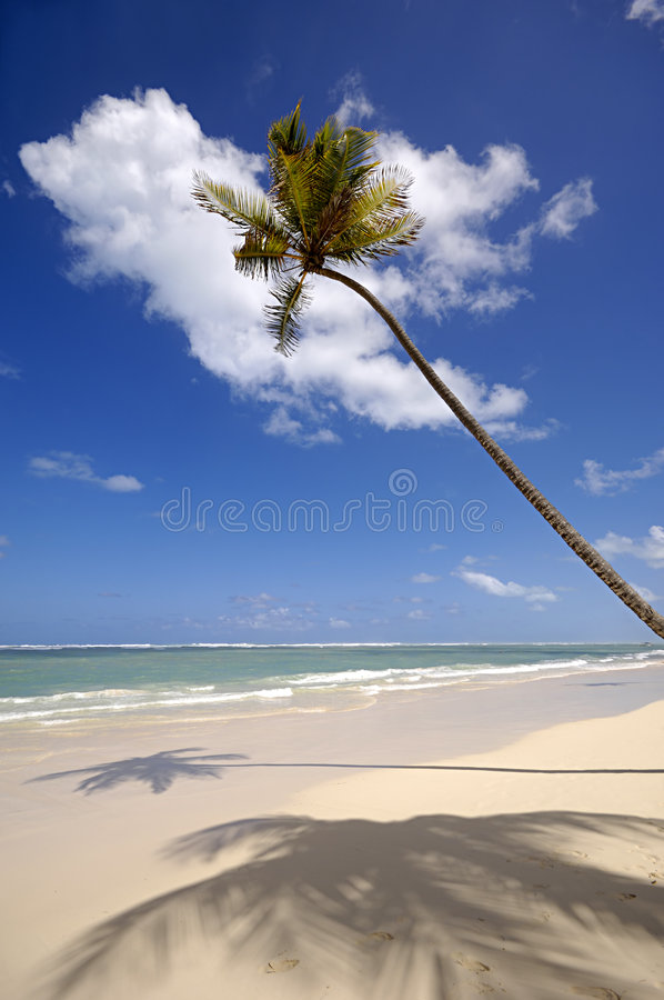 Palm op exotisch strand royalty-vrije stock foto