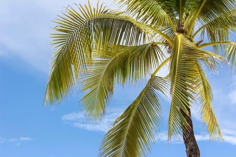 Palm op hemelachtergrond royalty-vrije stock afbeelding
