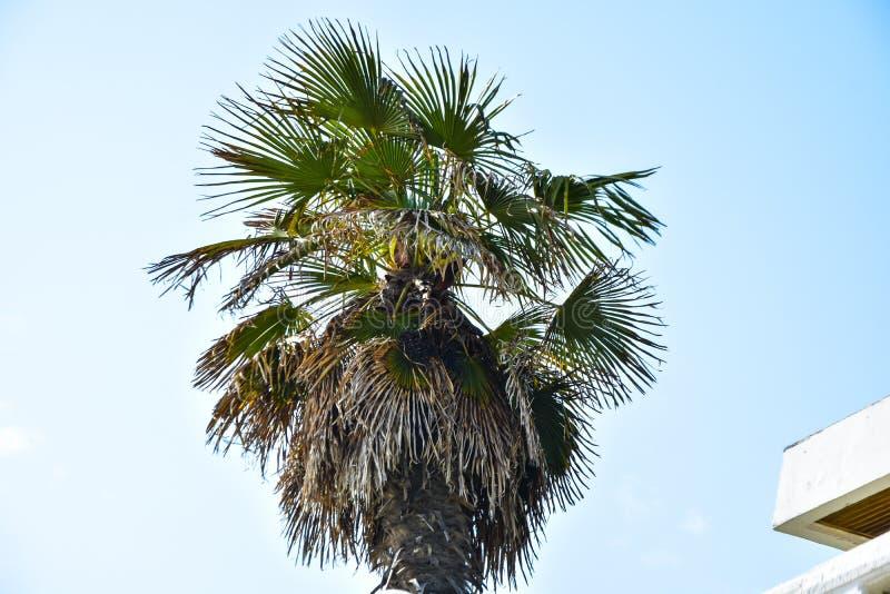 Palm op hemelachtergrond die wordt ge?soleerd stock foto