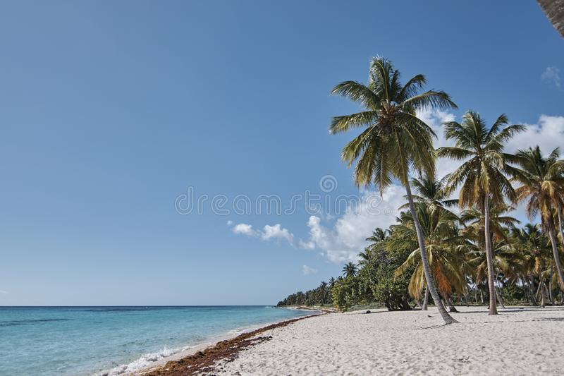 Palm op het Caraïbische strand royalty-vrije stock foto