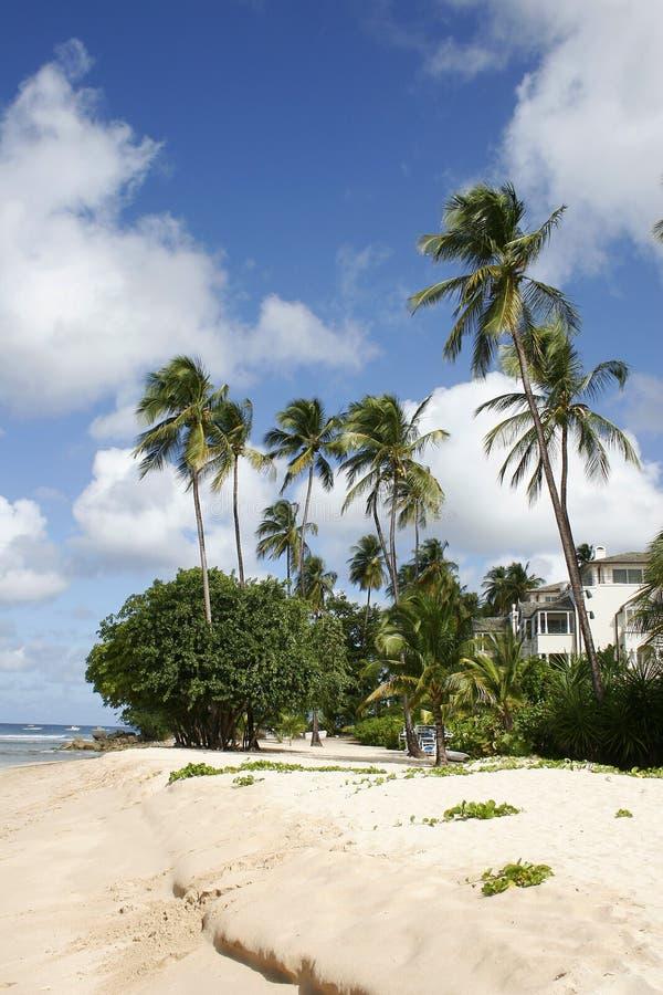 Palm op het luxestrand royalty-vrije stock foto