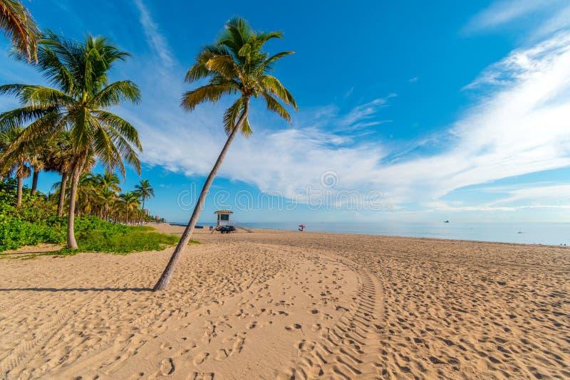 Palm op het strand van Miami op een zonnige dag, Miami, Florida, de Verenigde Staten van Amerika stock foto