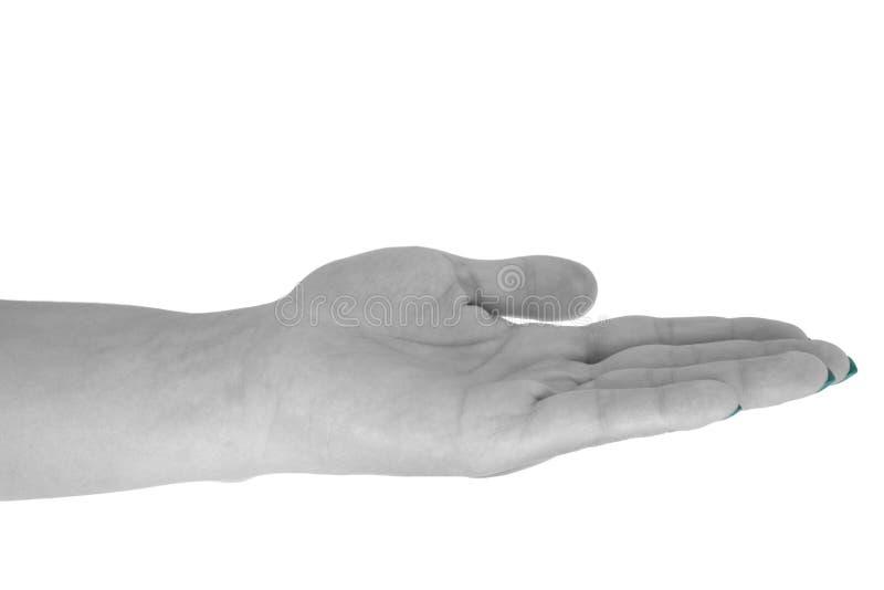 Palm op holding iets, de huid van het natuurlijke wijfje, cyaanmanicure Geïsoleerdj op witte achtergrond stock afbeeldingen