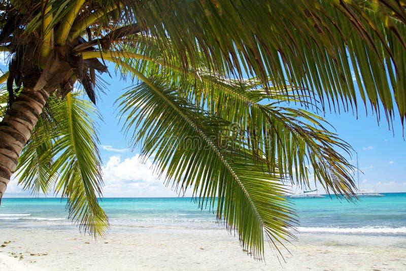 Palm op kalm Caraïbisch strand stock foto's