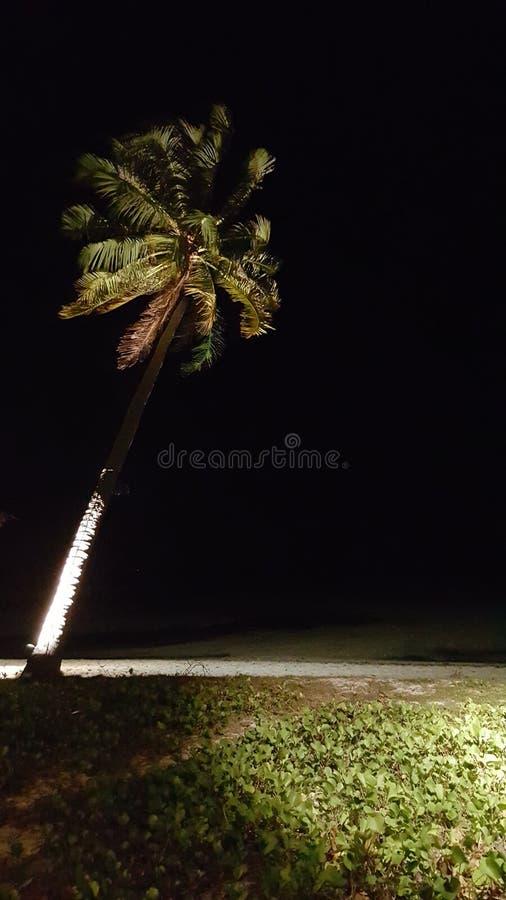 Palm op strand bij nacht royalty-vrije stock fotografie