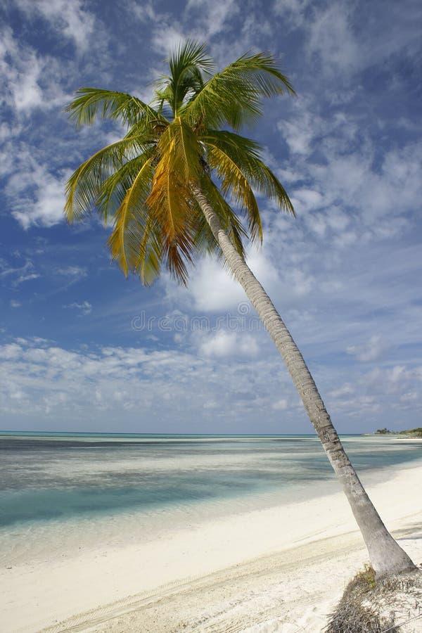 Palm op tropisch strand royalty-vrije stock afbeeldingen