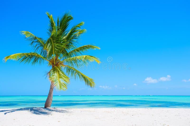Palm op tropisch strand royalty-vrije stock foto's