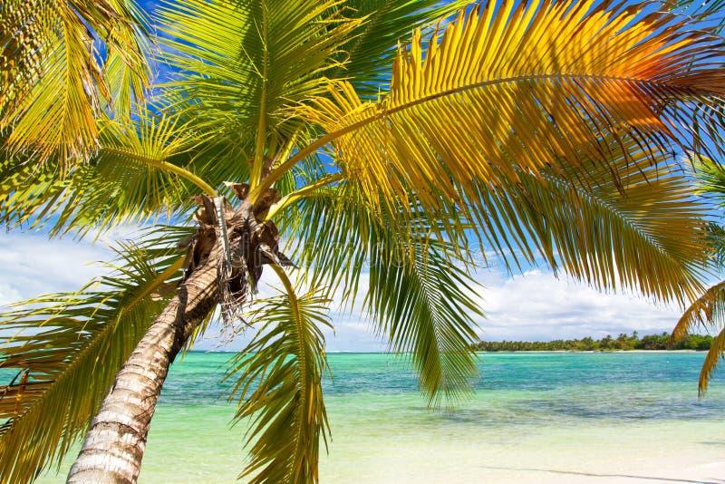 Palm op tropisch strand van Caraïbische overzees stock fotografie