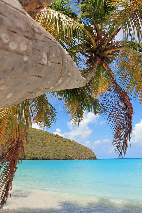Palm op Tropisch Strandeiland stock foto's