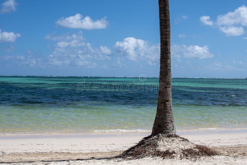 Palm op wit zandstrand royalty-vrije stock fotografie