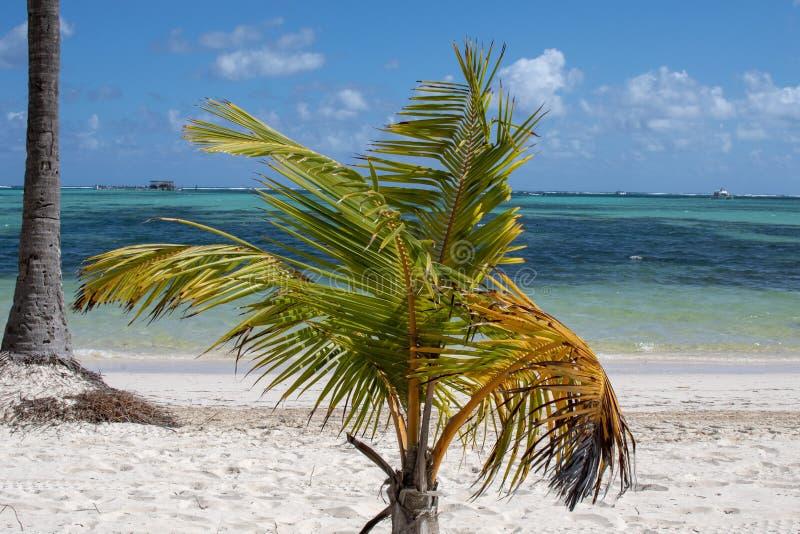 Palm op wit zandstrand royalty-vrije stock afbeeldingen