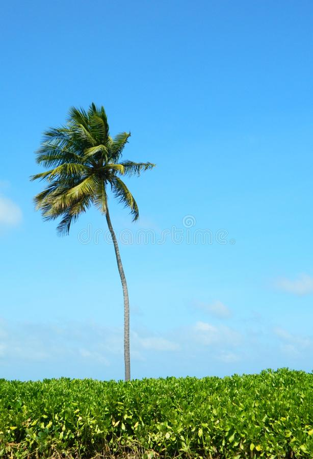Palm over blauwe hemel stock foto