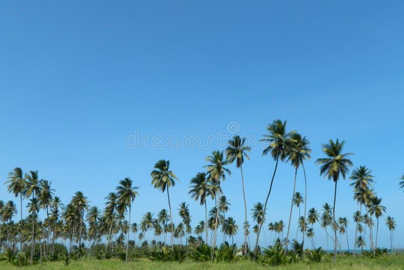 Palm over blauwe hemel stock afbeelding
