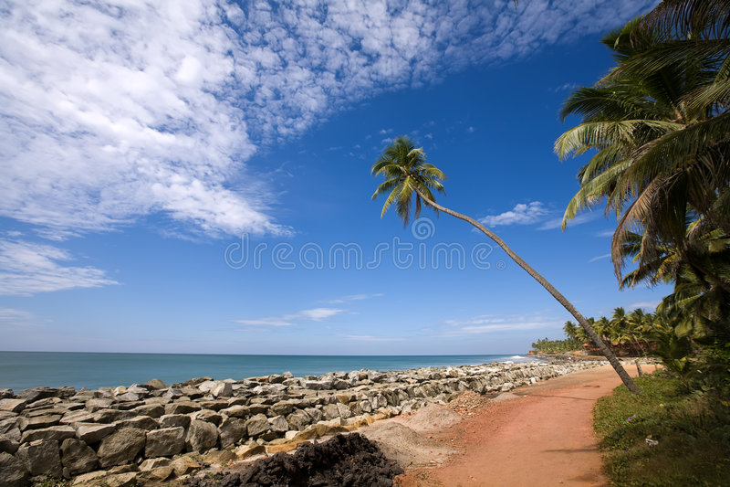 Palm over blue sky. Green lonely palm on the beach in India over blue sky royalty free stock image