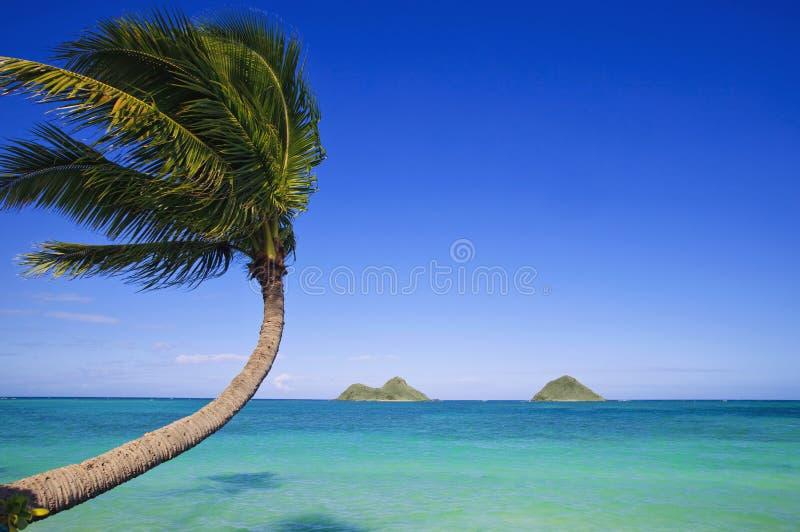 Palm over de oceaan stock foto's