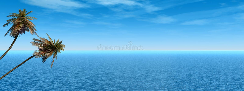 Palm_Panorama ilustração stock