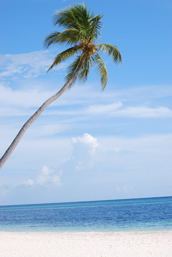 Palm in paradijs stock fotografie