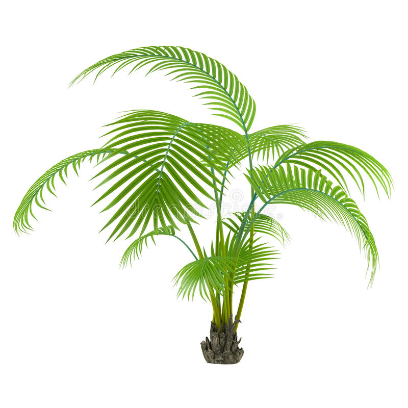Palm plant tree vector illustration