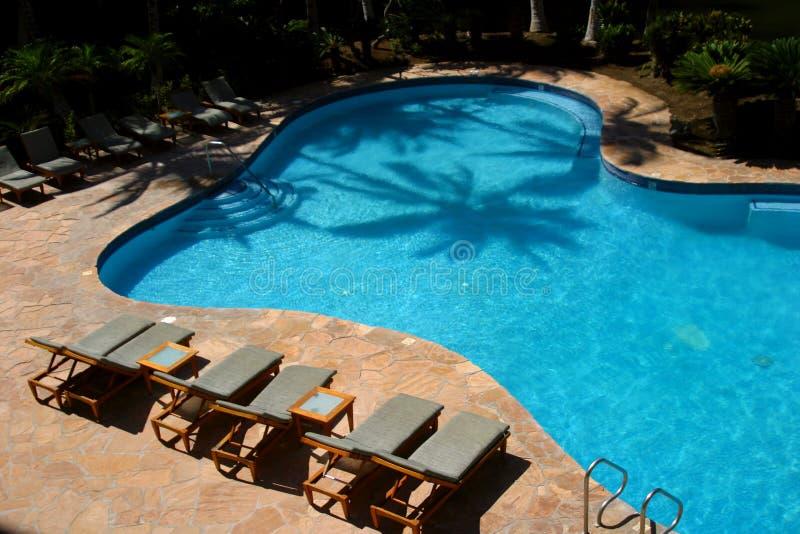 Palm Pool royalty free stock photos