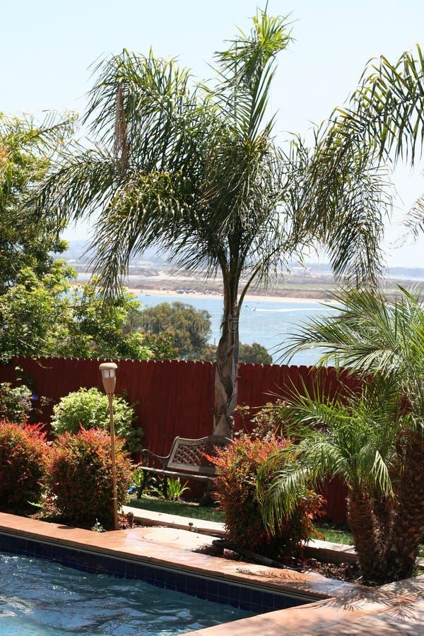 Palm, pool, baai, binnenplaats royalty-vrije stock afbeelding