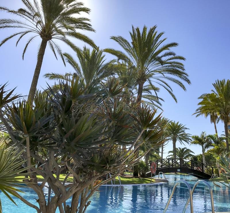 Palm pool  bright sunny day royalty free stock photography