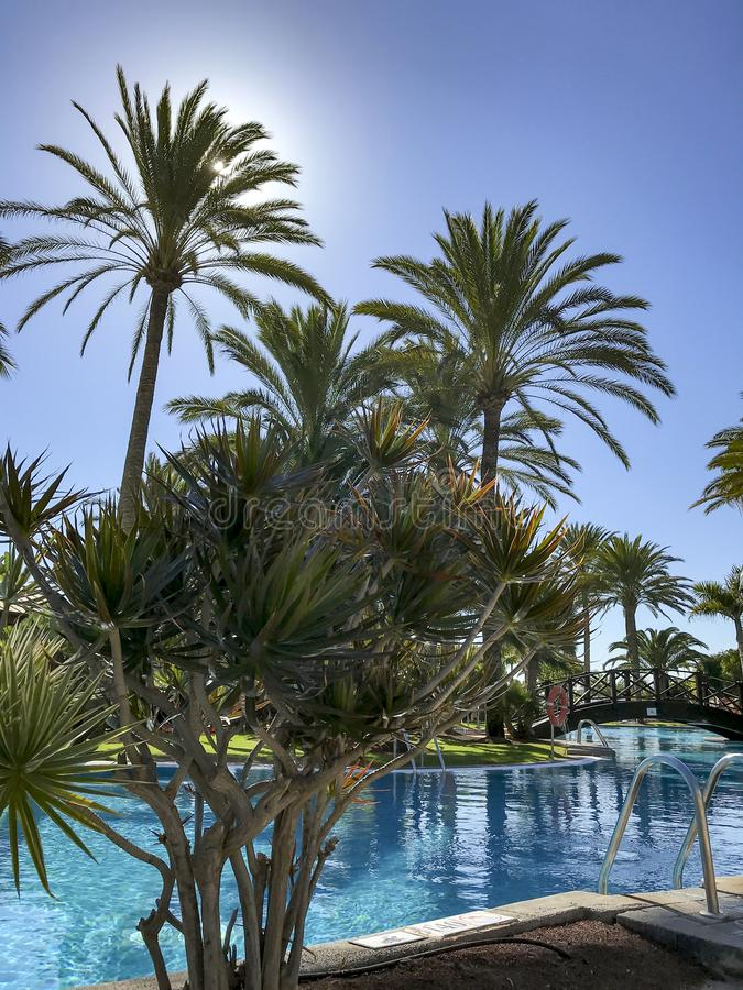 Palm pool  bright sunny day stock images